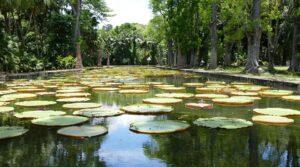Ninfee giganti giardino Pamplemousses