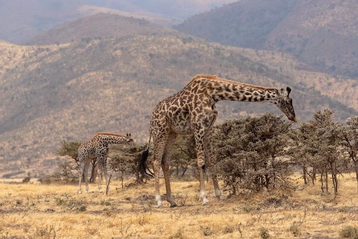 Parco Ngorongoro